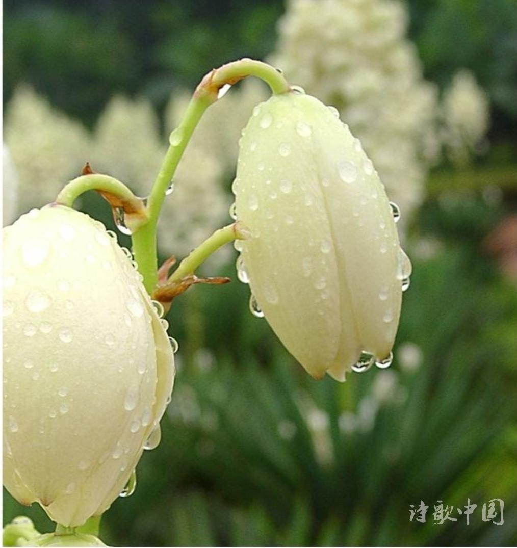 中秋雨-1.jpg